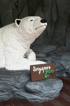 The last Ice bear, Singapore Zoo