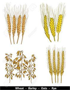 cereals - Google 搜尋 Rye, Cereal, Google, Breakfast Cereal, Rye Grain, Corn Flakes