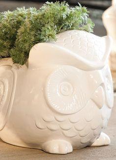 Adorable owl planter