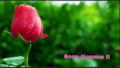 Flower Good Morning Wallpapers