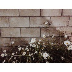 hiwory / 2013.10.22  #오늘 발견한 #아름다움  _ #가을#일상#담벼락#꽃 #instadaily#flower#instaflower#autumn#fall #hiwory  / #골목 #담벼락 #식물 / 2013 10 22 /