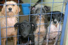 Please help adopt animals in Portugal