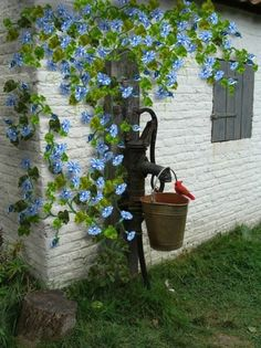 morning glories could be trained to grow up and over garden shed in back yard. Would be much prettier this way.