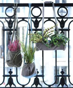 plants in bags on railing-- perfect for my apartment