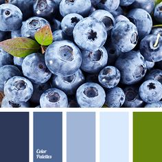 blueberries color