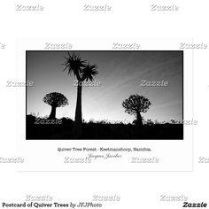 Postcard of Quiver Trees