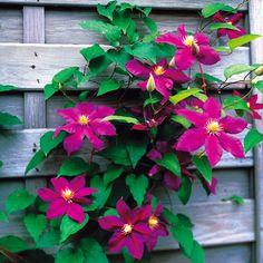 Boho Decor, Outdoor Gardens, Countryside, Outdoor Living, Home And Garden, Flowers, Gardening, Design, Tips