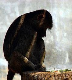 Spank the monkey saluda