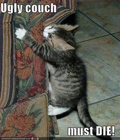 LOL Cat #28                                                       …