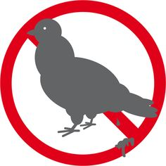 picto anti crottes de pigeon! Noémie BSG. Rooster, Animals, Design, Graphic Design, Animales, Animaux, Animal, Animais