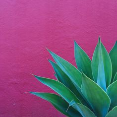 green thumb | plants on pink