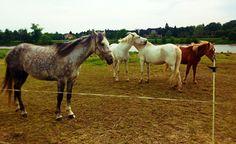 hottehüh: pferdeliebesdiebe.  #elbwiesen #hintermblauenwunder