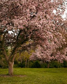 Pink flower tree photography of a blooming crabapple tree in spring. Add a dose of magic and fantasy to your home with Magic Garden. Spring Photography, Tree Photography, Landscape Photography, Pink Flowering Trees, Magic Garden, Dream Garden, Spring Nature, Spring Garden, Spring Tree