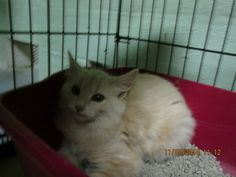 FENELLA HAS BEEN RESCUED BY SUZY'S ZOO FELV SANCTUARY