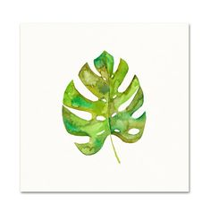 Title: Split Leaf Philodendron  Archival Watercolor Print.  This is an archival quality print of my original watercolor painting.  First photo size shown is 12 x 12.  For size options click the size bar in the upper right corner of the page:  5 x 7: $14  8.5 x 11 (Can be trimmed to fit an 8 x 10 frame): $24  11 x 14: $40  12 x 12: $40  16 x 20: $60  The print comes lightly signed and dated in pencil below the image, please let me know if youd prefer it unsigned.  Your print is carefully…