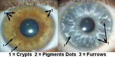 eyes as windows to the soul; scientific view