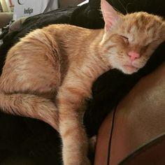 Das ist ein trauriges Gesicht, und es gehört zu BenBen der Katze. Er war ein Tierheim-Kater, der ruhig in seinem Käfig saß, bis ein Paar ihn nach Hause brachte. Und er verwandelte sich innerhalb einer Stunde! BenBen wurde mit einem Blumenkohl-Ohr, einer verkleinerten Wirbelsäule und mehreren tiefen Wunden in das Tierheim gebracht. - Anzeigen - …