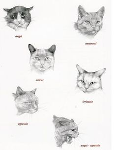 What tells your cat with his / her ears.