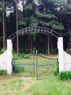 Kaapsehoop graveyard