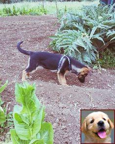 Pin By Luckypetdeals On Lucky Deals Dog Classes Class Pet Pets