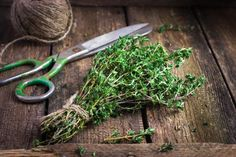 10 best herbs to grow in indoor pots in your kitchen garden.These easy-to-grow herbs offer big health benefits yet still fit on your windowsill. Growing Herbs At Home, Best Herbs To Grow, Gardening For Dummies, Gardening Tips, Pallet Gardening, Indoor Vegetable Gardening, Organic Gardening, Sage Plant, Types Of Christmas Trees