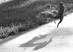 Fast-thinking photographer captures incredible 'Ninja squirrels' image~ by Pete Thomas   LOVE IT