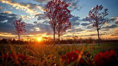 automne fond d'écran HD automne-arbres-wallpaper-hd