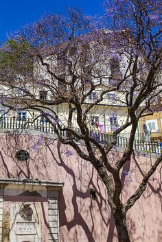 Just gorgeous- blue sky, lilac flowers, pink Buildings - Lisbon is beautiful!