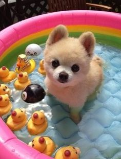Puppy dog in blow up pool