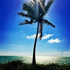 . Beautiful Places In The World, Beautiful Things, Turtle Bay, Tree Of Life, Palms, Vacation Spots, The Great Outdoors, Summer Vibes, Palm Trees
