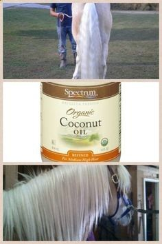 Coconut oil works wonders on a horses mane and tail. Just massage it into the base of the mane or tail and leave it dont wash it out. You can do it as much as you like. It will soon make it soft and supple and also helps with hair growth. You can buy it from the store.