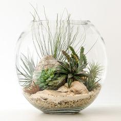 HPT-terrarium-fishbowl-classic-desert-xl-1000px-7399                                                                                                                                                                                 More
