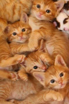 .Beautiful orange kittens!