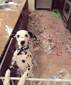 18 crazy pets who weren't expecting their owners to come home early