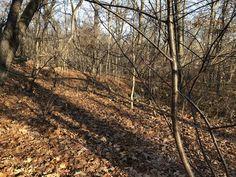 Thain Family Forest – Bronx, New York - Atlas Obscura