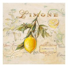 Wildon Home 'Tuscan Lemon' by Angela Staehling Framed Painting Print Painting Frames, Painting Prints, Wall Art Prints, Framed Prints, Paintings, Posters Vintage, Vintage Images, Vintage Prints, Lemon Art