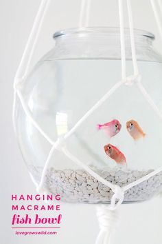Hang a fish bowl from the ceiling with this awesome macrame hanger! Give your fish a stylish home and save table space! Step-by-step details. Diy Aquarium, Aquarium Ideas, Pot Hanger, Creation Deco, Arts And Crafts, Diy Crafts, Macrame Projects, Diy Home Decor, Projects To Try