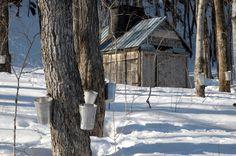 Ferme à l'érable, cabane à sucre, Québec