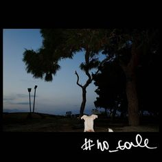No tale #skantzman #no_tale #heraklion #crete #stray_dog #dog #velvia #ricohgr #manolisskantzakis