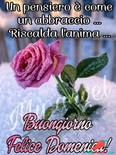 Immagini Belle Di Buongiorno - Pocopagare.com Good Morning Roses, Happy Sunday, Sunset, Quotes, Who Runs The World, Phrases In Italian, Thoughts, Messages, Trading Cards
