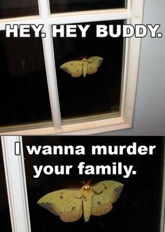 """Hey. Hey buddy. I wanna murder your family."" - Creeper Moth"