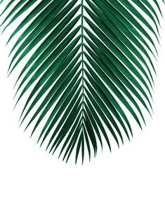 43 Ideas for green nature backgrounds palm trees Palm Tree Leaves, Green Leaves, Palm Trees, Tropical Art, Tropical Leaves, Tropical Plants, Bd Pop Art, Leaf Prints, Art Prints