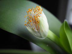 Dandelion, Planters, Flowers, Dandelions, Planter Boxes, Plant, Flower Pots, Royal Icing Flowers, Flower