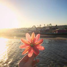 Santa Cruz CA: Happy St. Patrick's day from Santa Cruz California#Feelinglucky by cafin