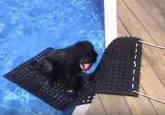 DIY Rubber Mat Pool Ramp - petdiys.com