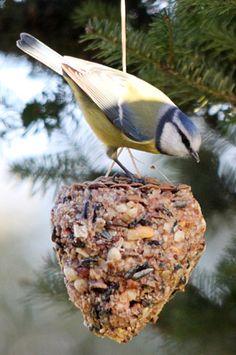 Die 46 Besten Bilder Von Garten Vogelfutter Selbstgemacht Bird