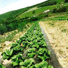 Hollins Farm 2