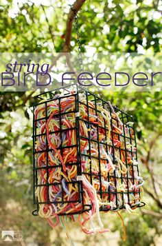 Make a string filled bird feeder and watch as the birds take pieces to make their nests.