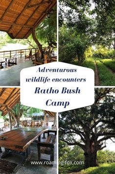 Adventurous wildlife encounters at Ratho Bush Camp — Roaming Fox Adventure 4x4, Africa Travel, Amazing Destinations, World Heritage Sites, Travel Around The World, The Great Outdoors, South Africa, Travel Inspiration, Chalets