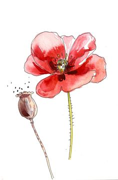 Yellow cone flower brown center original watercolor art painting pen and in Watercolor Flowers Tutorial, Watercolor Poppies, Watercolor Drawing, Watercolor And Ink, Watercolor Illustration, Painting & Drawing, Watercolor Paintings, Watercolors, Art Floral